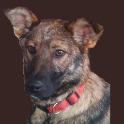 Traudel, unser Hund